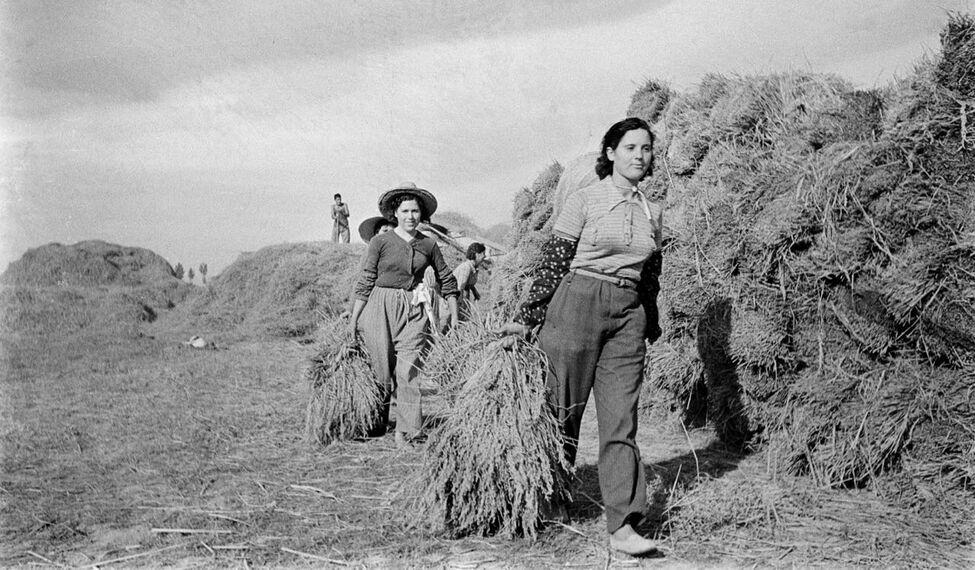 https://roarmag.org/wp-content/uploads/2019/12/exposicion-muestra-colectivizaciones-agricolas-Catalunya_EDIIMA20191213_0946_19.jpg
